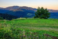 Free Wild Herbs And Tree In Mountains Stock Images - 33116924