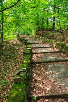 Winding Stone Steps With Foliage Vertical Royalty Free Stock Photo
