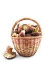 Free Basket Mushrooms Royalty Free Stock Photography - 33122147