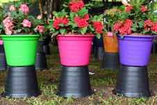 Free Colorful Flower Pots. Royalty Free Stock Photography - 33137567
