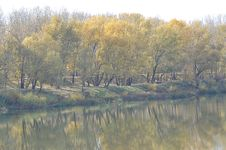 Free Trees In Autumn Royalty Free Stock Photos - 33149978