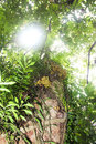 Free UNDER THE TREE Stock Image - 33162611