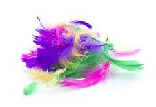 Free Feathers Stock Photos - 33164443