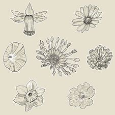Free Set Of Seven Graphic Flowers Stock Photos - 33165253