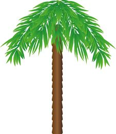 Free Palm Stock Photography - 33166302