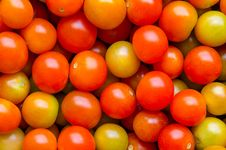 Free Tomatoes Royalty Free Stock Image - 33168656