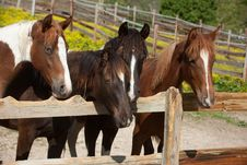 Free Horses Stock Images - 33170634
