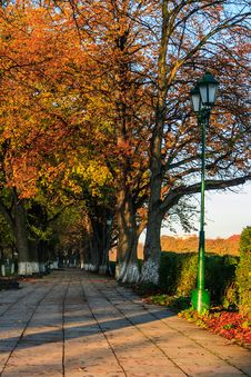 Trees Turned Yellow On Morning Fall Alley Royalty Free Stock Photo