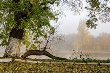 Fallen Branch On Foggy Embankment Stock Images