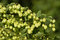 Free Crop Of Fresh Ripe Hop Stock Image - 33185921