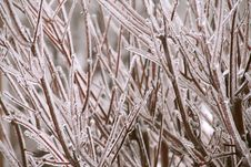 Free Icy Branches Stock Photos - 33190223