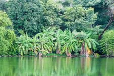 Free Tropical Forest Royalty Free Stock Photography - 33198317