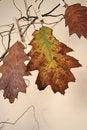 Free Beautiful Autumn Stock Images - 3320094