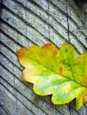 Free Color Leaf On Trunk Royalty Free Stock Images - 3321429