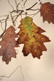 Free Beautiful Autumn Stock Images - 3320094
