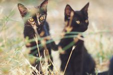 Free Black Cats Hiding On The Grass Stock Photo - 3320710