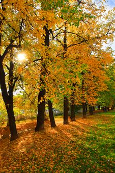 Free Autumnal Linden Lane Royalty Free Stock Photos - 3320788