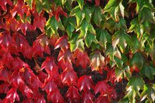 Free Autumn Leaves Stock Photo - 3320960