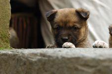 Free Puppy Stock Photo - 3322940
