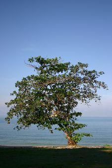 Free A Single Tree Stock Photos - 3323393