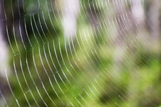 Free Spider S Web Close-up. Stock Image - 3324711