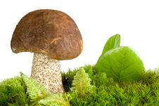 Brown Cap Mushroom Royalty Free Stock Photography