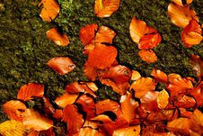 Free Background With Beech Leaves Royalty Free Stock Photo - 3325375