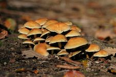 Free Mushrooms Royalty Free Stock Photos - 3325488