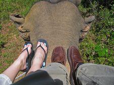 Free Elephant Ride Stock Photo - 3326160
