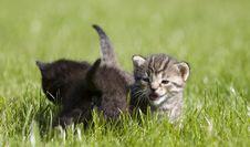 Free Kitty Stock Photo - 3326590
