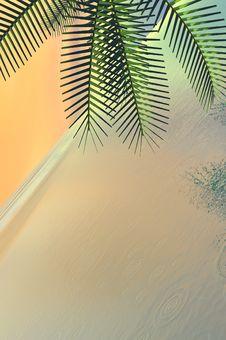 Free Palm Tree Stock Image - 3327001