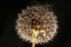 Free Dandelion Stock Photography - 3327522