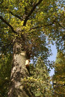 Free The Park In Krasiczyn. Stock Image - 3327641