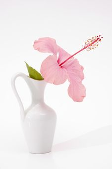 Free Hibiscus In A Vase Stock Images - 3328644