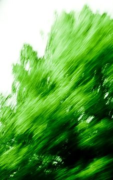 Free Green Texture  508 Stock Image - 3329071