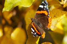 Free Delicate Butterfly Royalty Free Stock Photos - 3329968