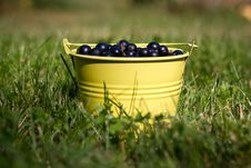 Free Blackcurrants Royalty Free Stock Photo - 33208015