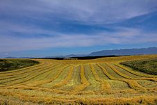 Free Harvest Lines Stock Photography - 33218152