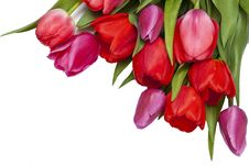 Free Pink And Purple Tulips Background Stock Photo - 33225920
