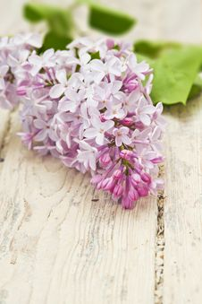 Lilac Branch On Wooden Table