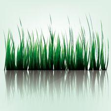 Free Grass Stock Image - 33232391