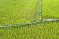 Free Detail Of A Rice Paddy Field - Vang Vieng, Laos Royalty Free Stock Images - 33240889