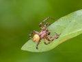 Free Spider Stock Image - 33244351