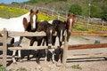 Free Horses Royalty Free Stock Photography - 33246907