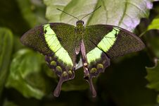 Free Close Up Shot Of Butterfly Royalty Free Stock Photo - 33256625