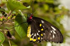 Free Close Up Shot Of Butterfly Stock Photography - 33256682