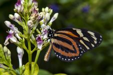Free Close Up Shot Of Butterfly Stock Images - 33256734