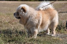Free Summer Show Dog Stock Photos - 33257163