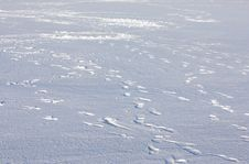 Snow Surface With Footprints Stock Photography