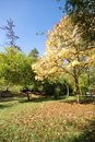 Free Autumn Colors Park Royalty Free Stock Photo - 3330945